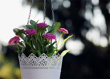 hanging-bottle-garden