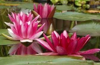 13 Plants for the Pond or Aquarium