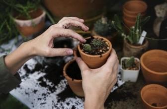 10 Gardening Gift Ideas