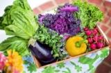10 Tips for the Beginner Gardener